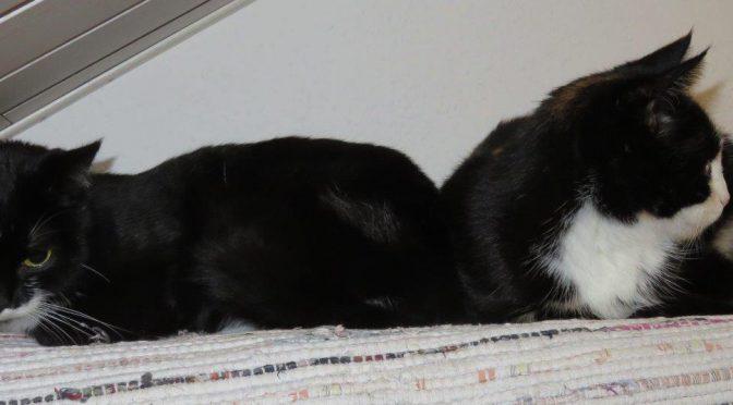 Minka und Dufti suchen ein Zuhause